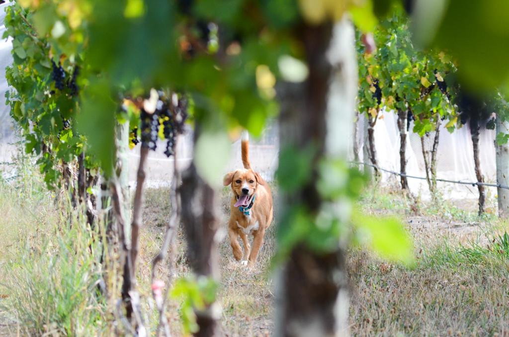 Wineries - Catlins-2