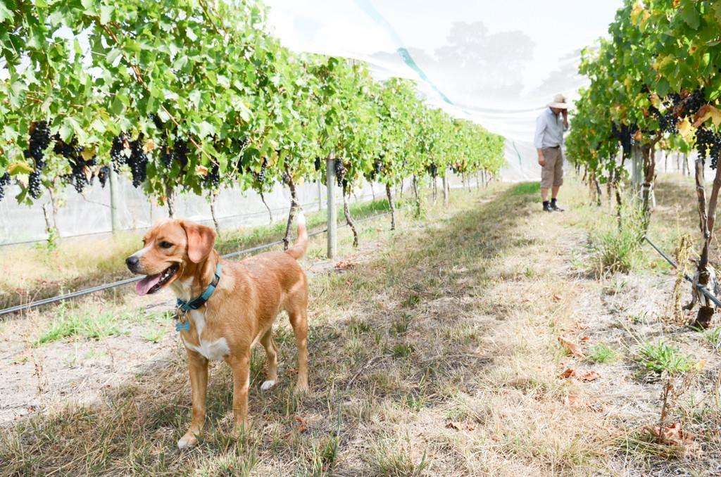 Wineries - Catlins-3