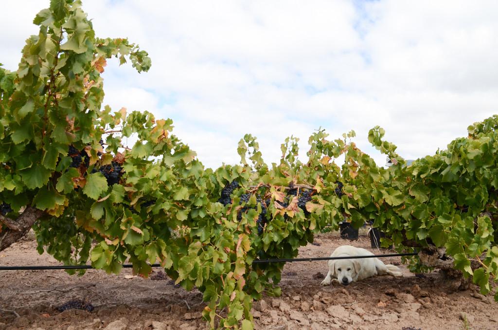 Wineries - Teusner-3