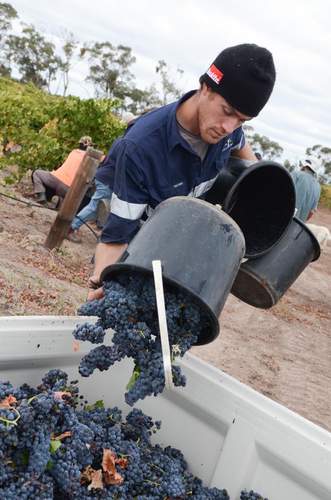 Wineries - Teusner-7-2