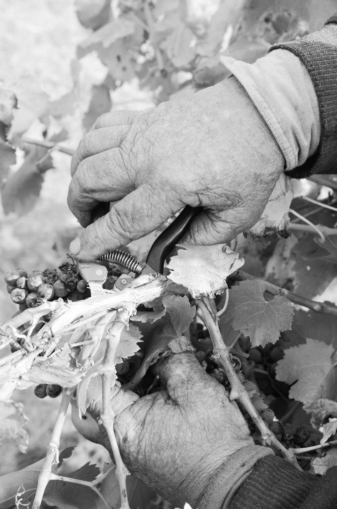 Wineries - Teusner-8-2
