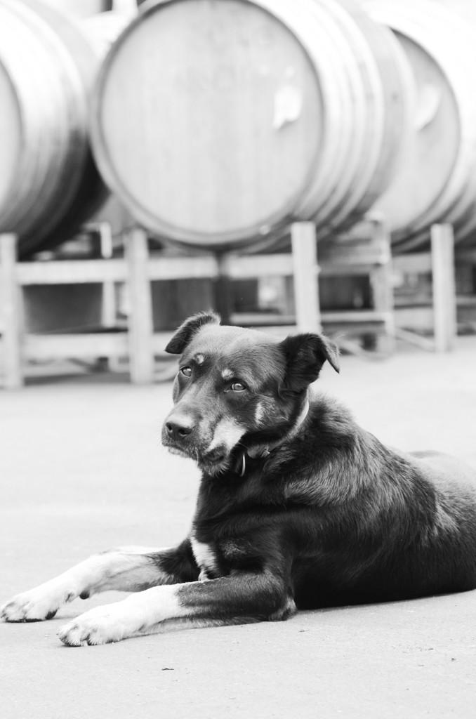 Wineries - Teusner-9